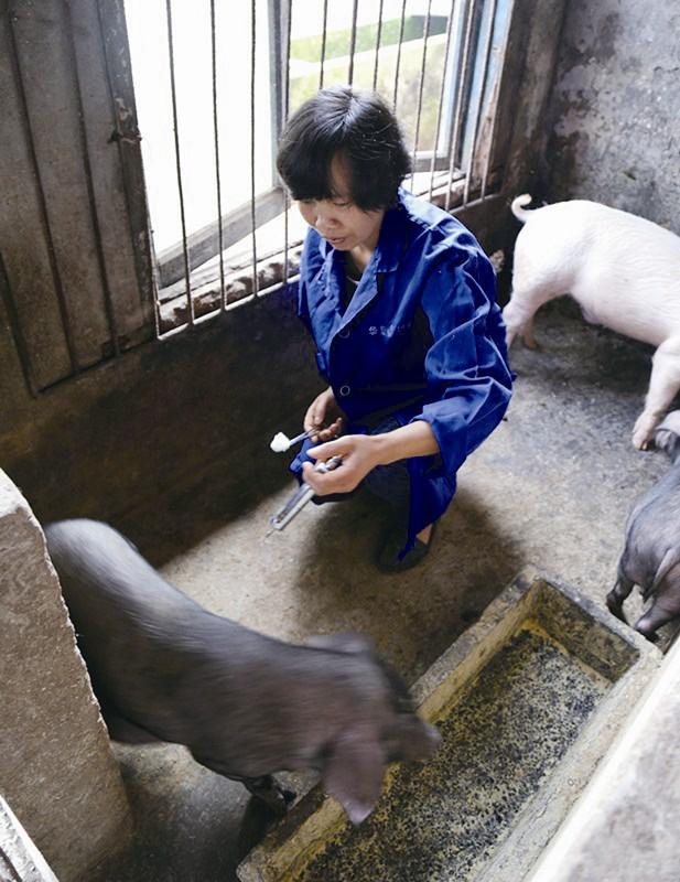 当前我市动物防疫工作中存在的问题及对策