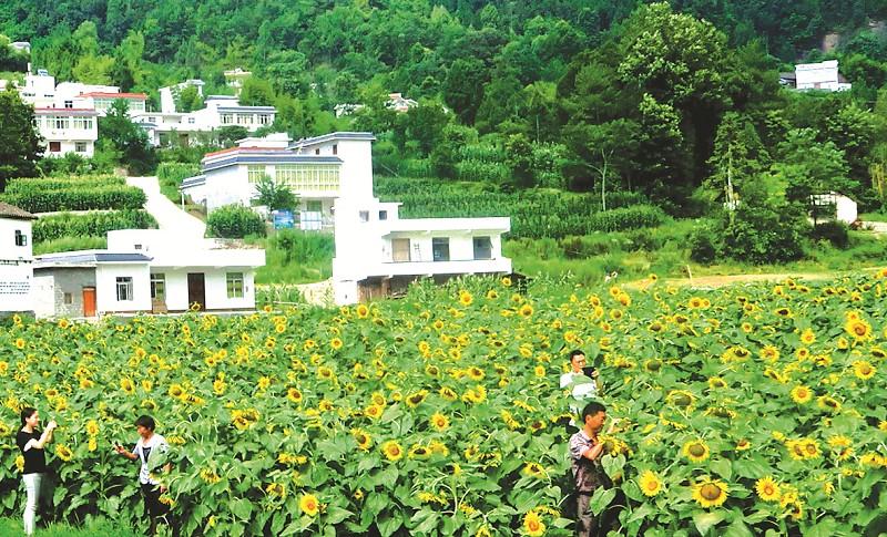 绿色田园,美丽乡村.